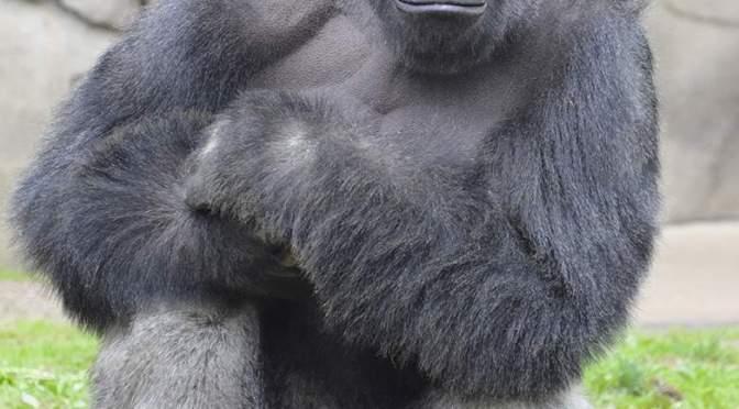 Harambe the Gorilla and unattentive parents