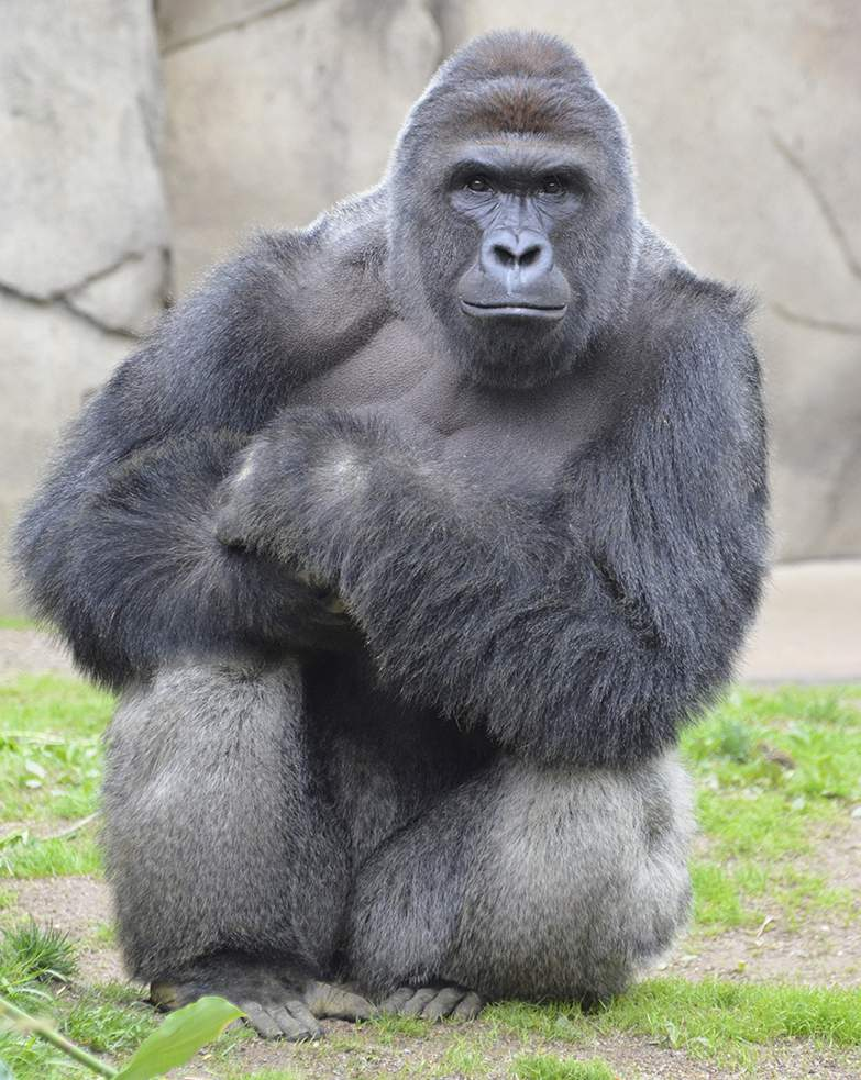 Harambe the Gorilla and unattentive parents